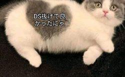 もう間近、日本DS残党へのタイムリミットは刻々近づいている